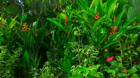 Tropical green plants and flowers