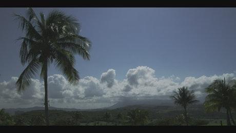 Tropical nature landscape