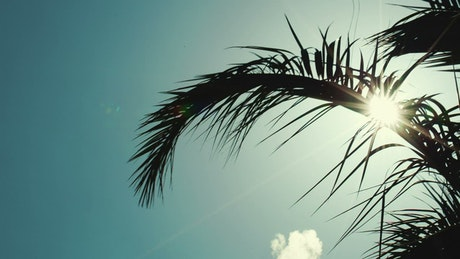 Tropical sun and cool breeze