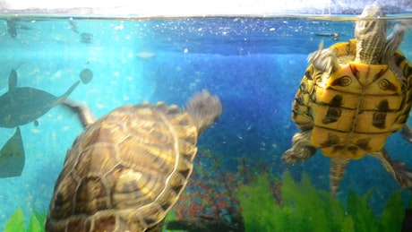 Turtles in a shop tank