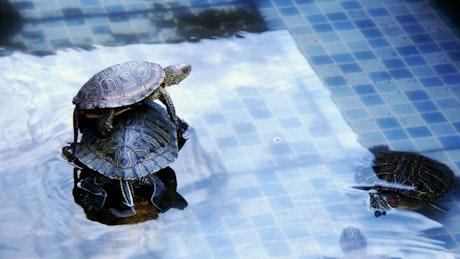 Turtles resting in a pool