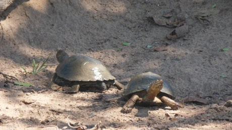 Turtles resting on the ground