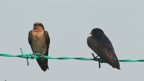 Two birds resting on metal wire
