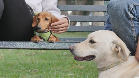 Two dogs resting with their owners on a park bench