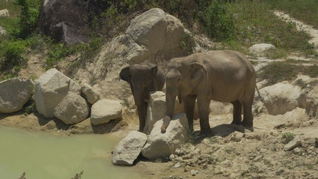 Two elephants on the banks of a river