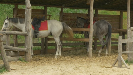 Two horses in the farm stable
