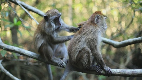 Two monkeys on a tree in the jungle