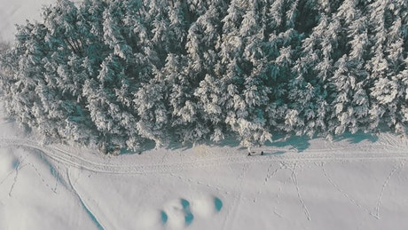 Two people walking along the winter forest