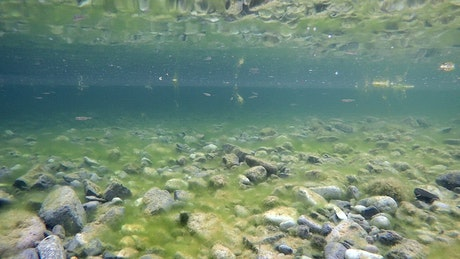 Underwater view of a lake with stones and little fish