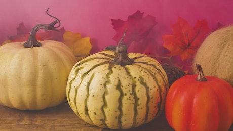 Variety of halloween pumpkins