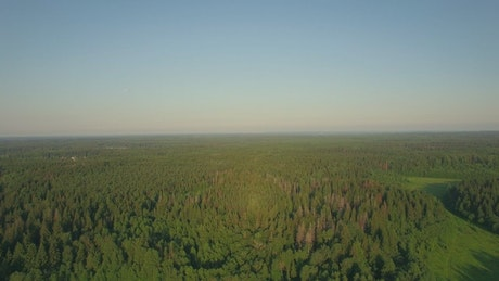Vast woodland in Russia