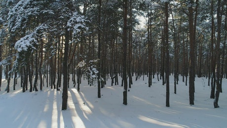 View of a drone flying low in a winter forest