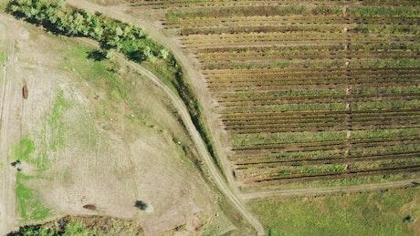 Vineyard and empty fields