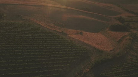 Vineyard as dusk