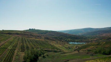 Vineyard with a small lake