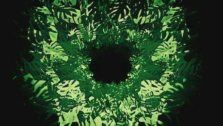Virtual tunnel between green tropical plants