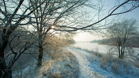 Walking a path in a frozen forest