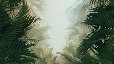 Walking through tropical plants and fog