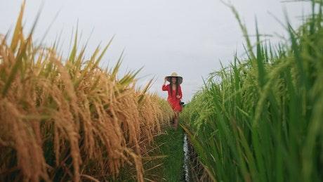 Wanderlust walking through an agriculture field