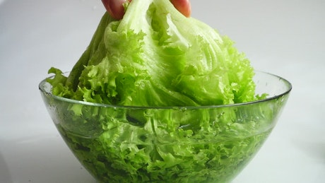 Washing lettuce before making a salad