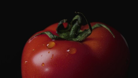 Water drops on a Tomato