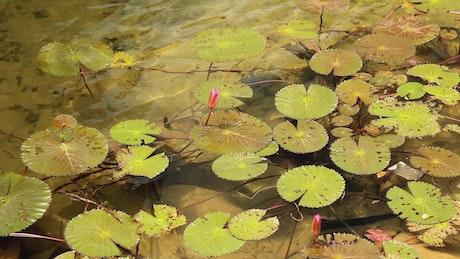 Water flowing below plants