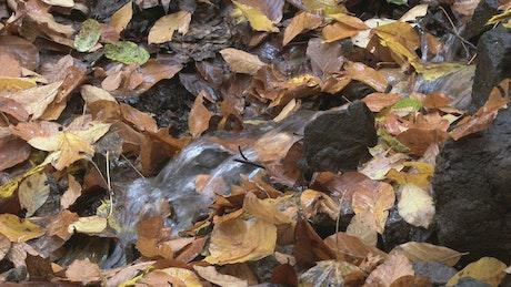 Water flowing between autumn leaves
