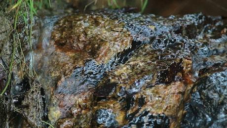 Water flowing over muddy rocks