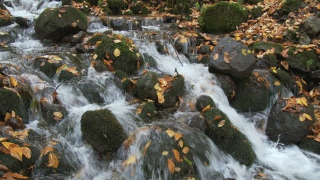 Water running through stream rocks and leaves