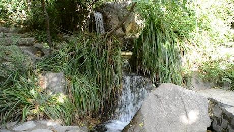 Waterfall between ferns
