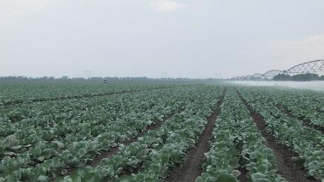 Watering large crop fields