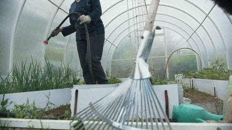 Watering the plant with a hose in the greenhouse