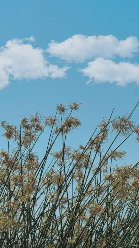 Weeds waving in the breeze