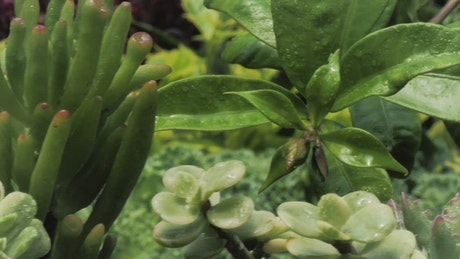 Wet green plants