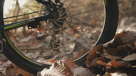 Wheel of a bicycle riding fast on dry leaves