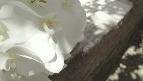 White orchids in detail on a sunny day