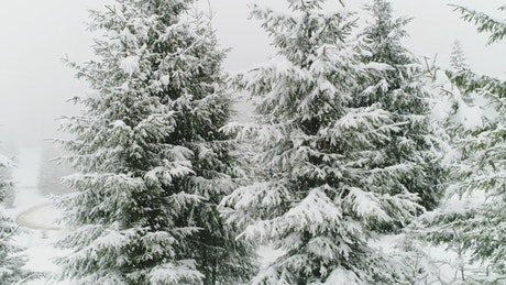 White winter forest full of snow and mug
