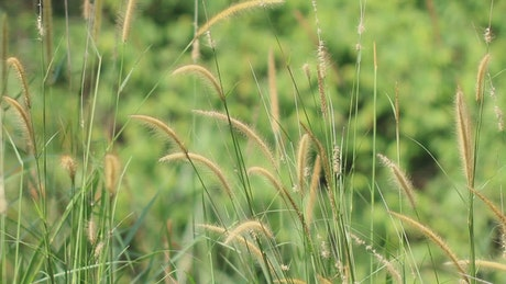 Wild grass and ferns