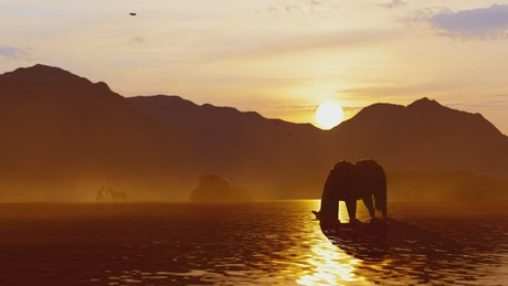 Wild horse drinking water in a river at sunset