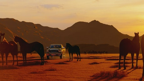 Wild horses and a rancher in his truck
