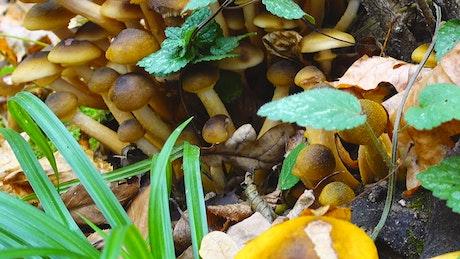 Wild mushrooms and wild plants