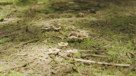 Wild mushrooms on a forest floor