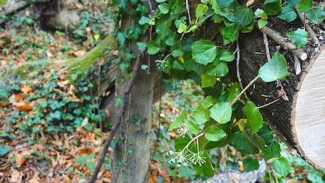 Wild plants growing on a cut tree