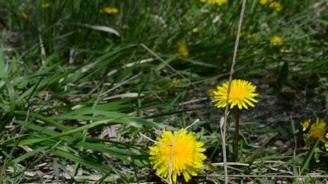 Wildflowers across dry grass