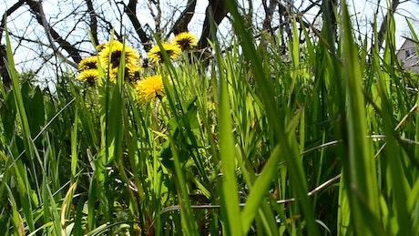 Wildflowers growing around dead trees