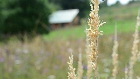 Wildflowers growing in a field