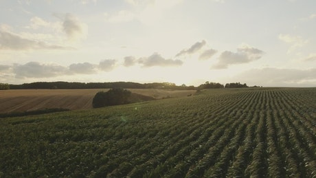 Wind blowing over crops