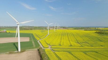 Wind farm in summer