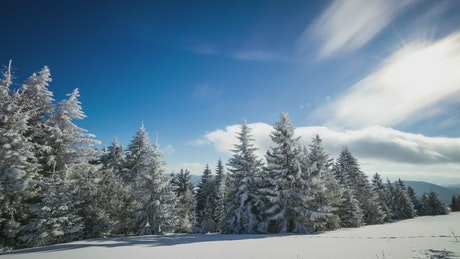 Wind moving clouds and trees in a snowy forest