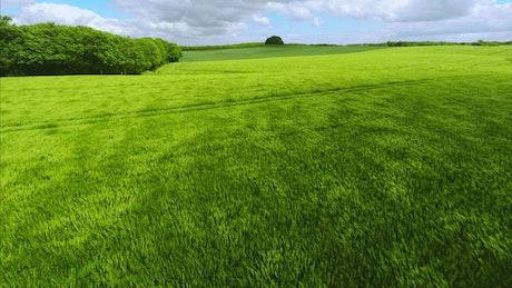 Windswept grasslands